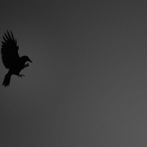 cropped-crow_wallpaper_dark_2560.jpg